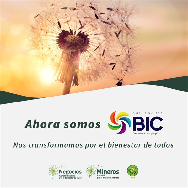 Mineros Aluvial and Negocios Agroforestales become Companies of Collective Benefit and Interest (BIC, for its acronym in Spanish)